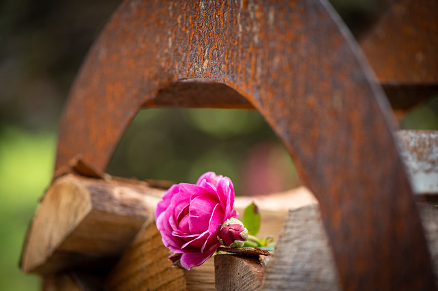 The rose on a piece of wood - My enztry for todays
