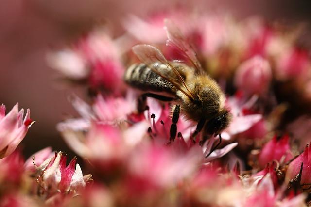Bee between Bokeh