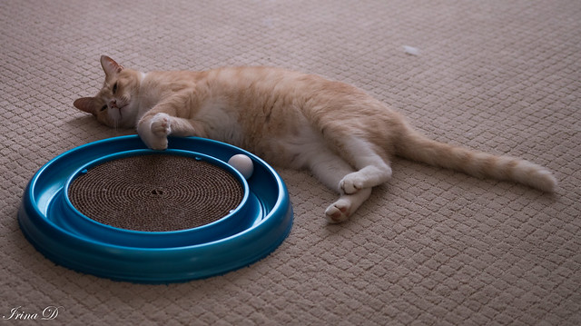 Suddenly tired - Happy Caturday!