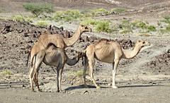 Oman '19