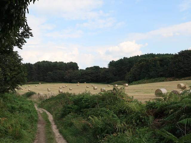 Rolling countryside, Weybourne, Norfolk