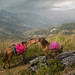 Thai horses - Doi Pha Tang - Lao border - North Thailand