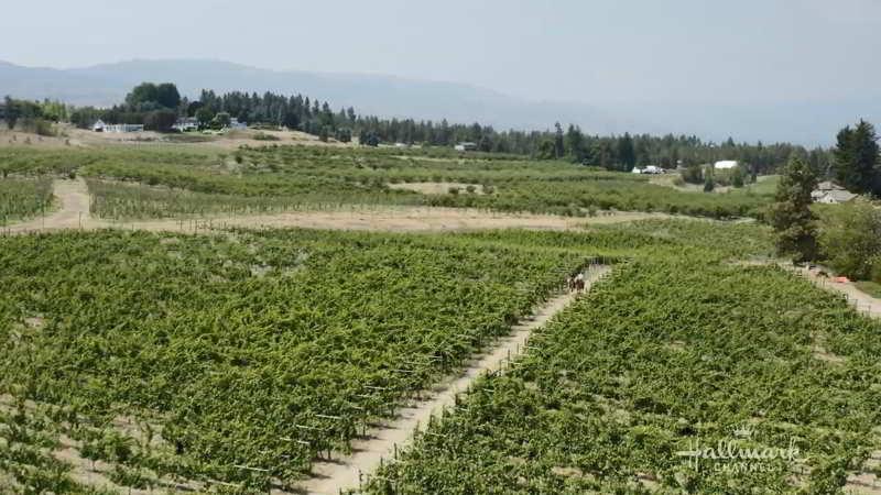 Okanagan Valley Vineyard