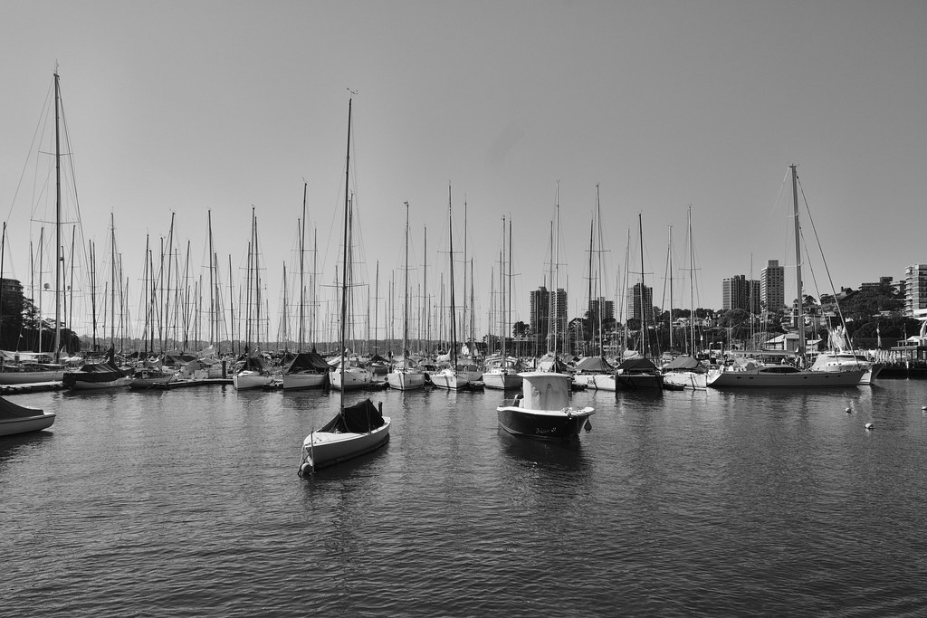 Rushcutters Bay.3
