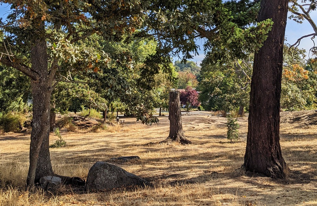 Robert J Porter Park - Fairfield, Victoria BC