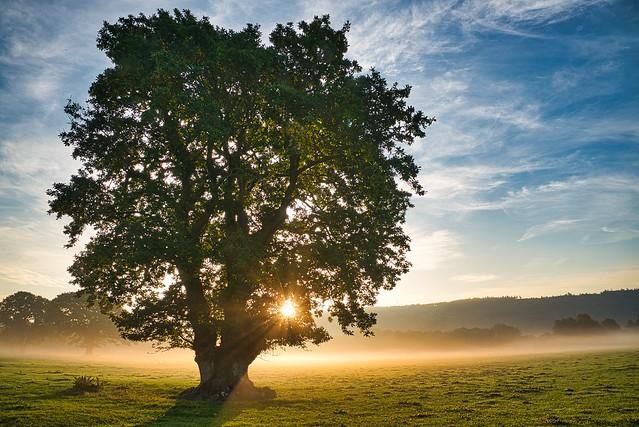 lone tree at coniston