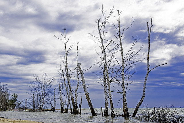 more shoreline casualties at Tawas Point
