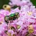 Beetle Pile-on