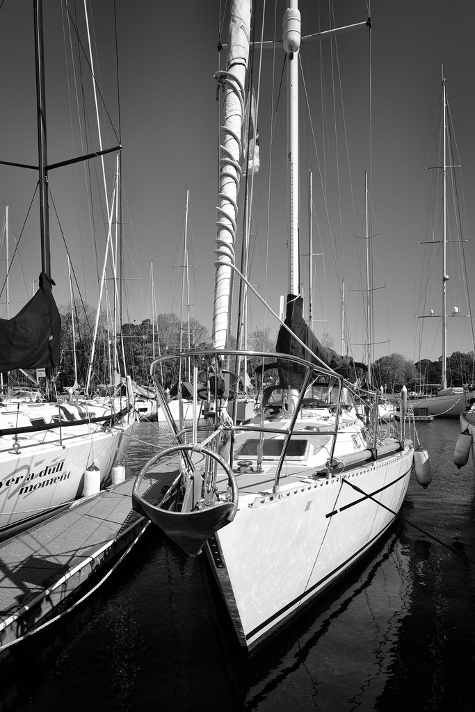 Rushcutters Bay.5