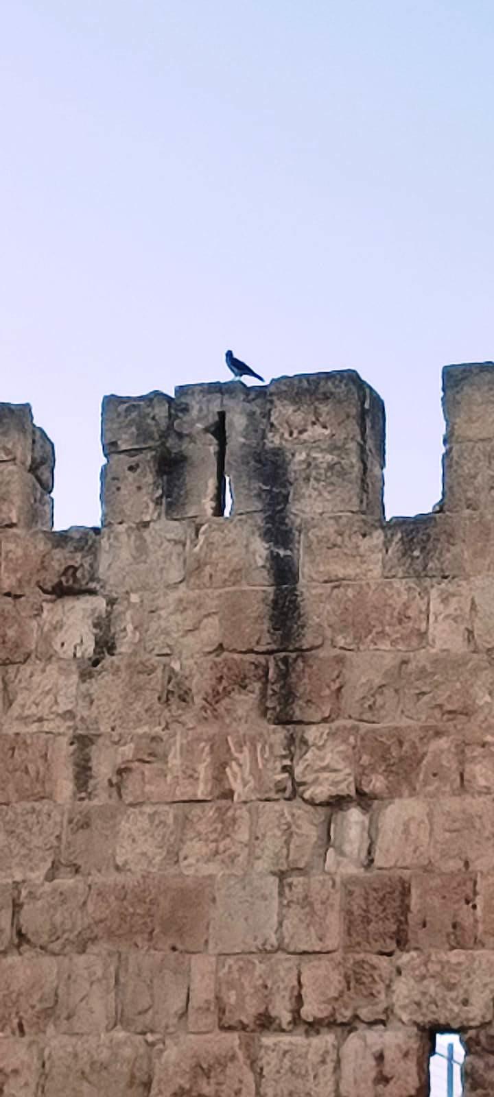 01. Вороны - стражи Старого города