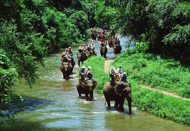 utkal-cd-wildlife-Chandaka-Elephamt-Sanctuary-lead-utkal-today