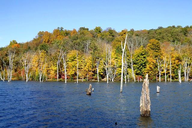 Autumn Dead Forest