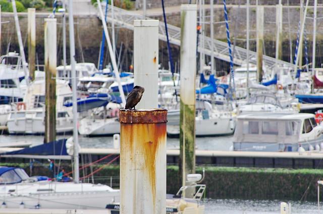 219 - Normandie Cotentin Août 2021 - Port de Dielette