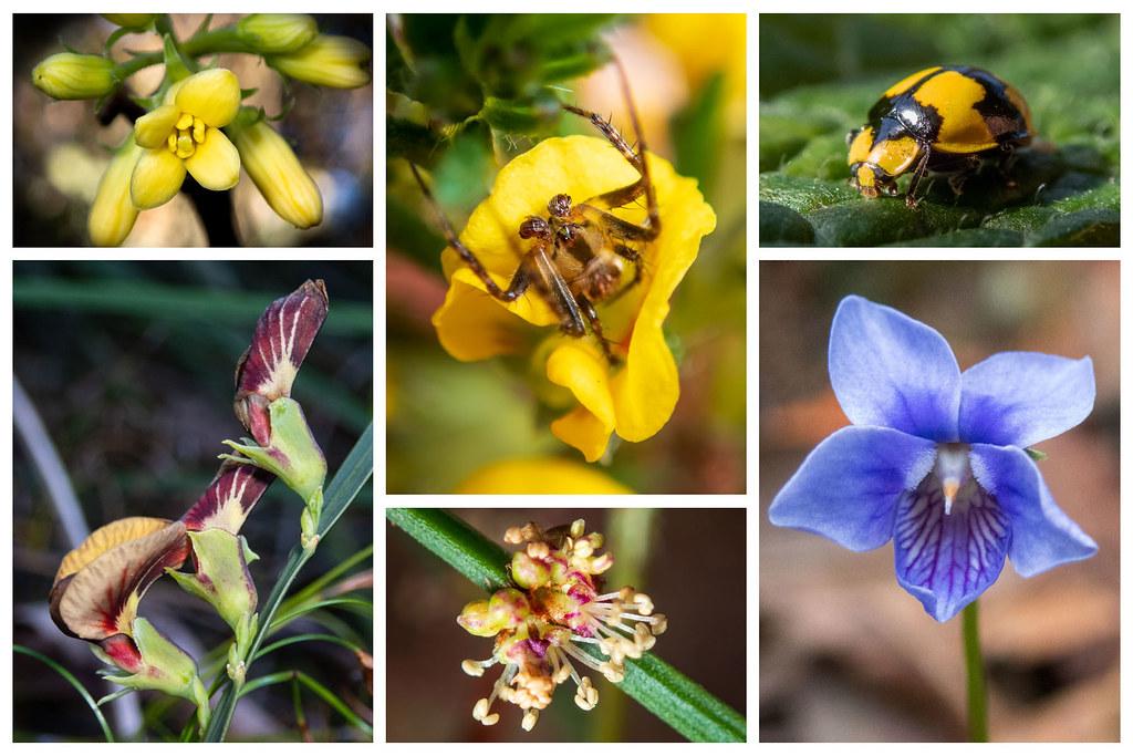 Wildflowers 16 w bugs