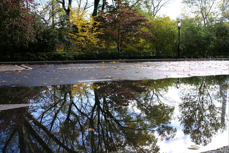Reflection, Central Park
