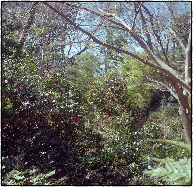Isolette undergrowth