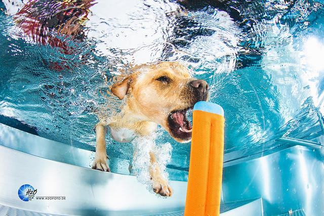 dogs underwater - Photoshootinghunde unterwasser