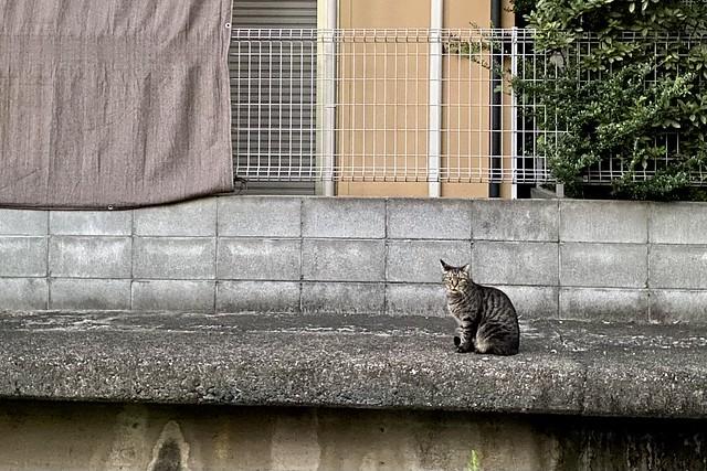 Today's Cat@2021−09−19