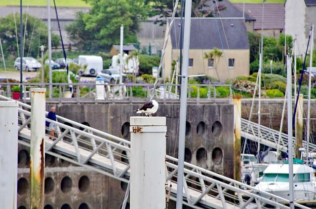 220 - Normandie Cotentin Août 2021 - Port de Dielette