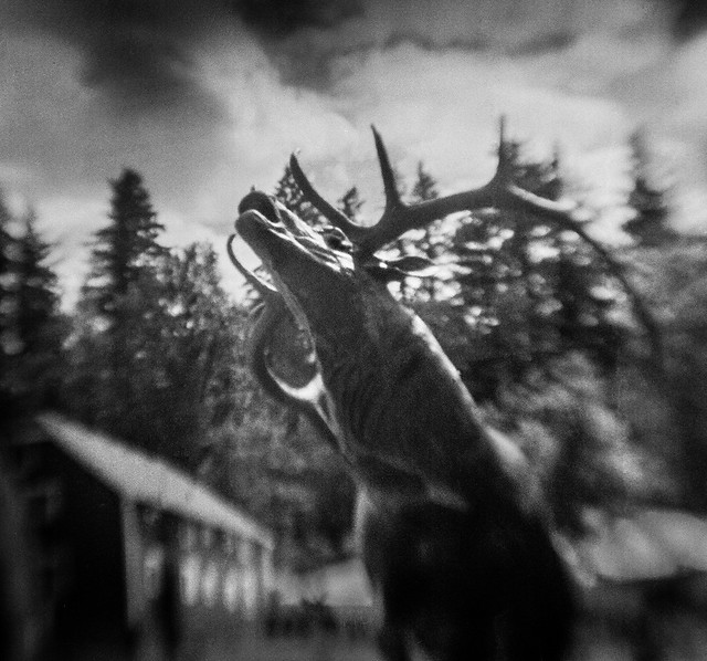 Spirit Elk