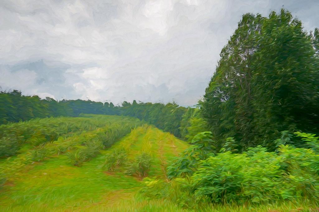 Skytop Orchard views 4