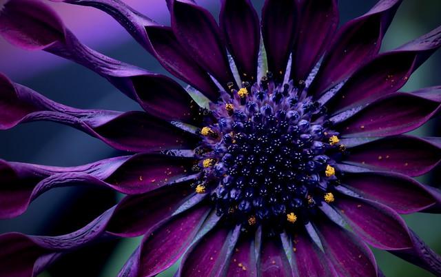 Purple so Perfect