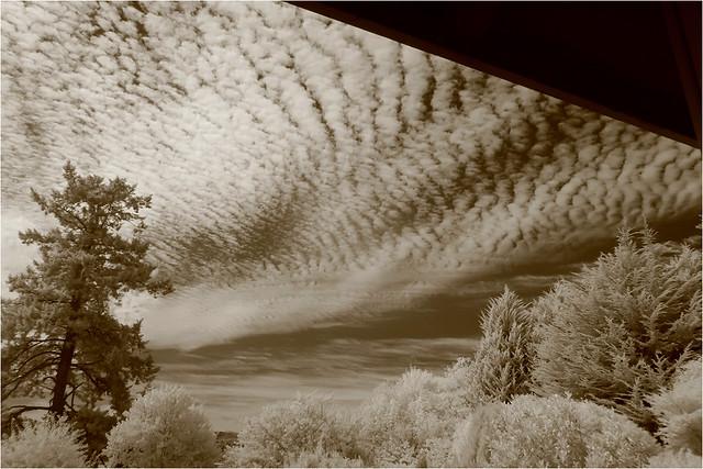 buttermilk sky...