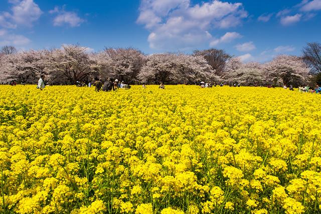 yellow,blue,white