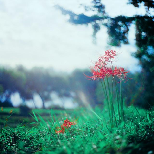 flower²_16