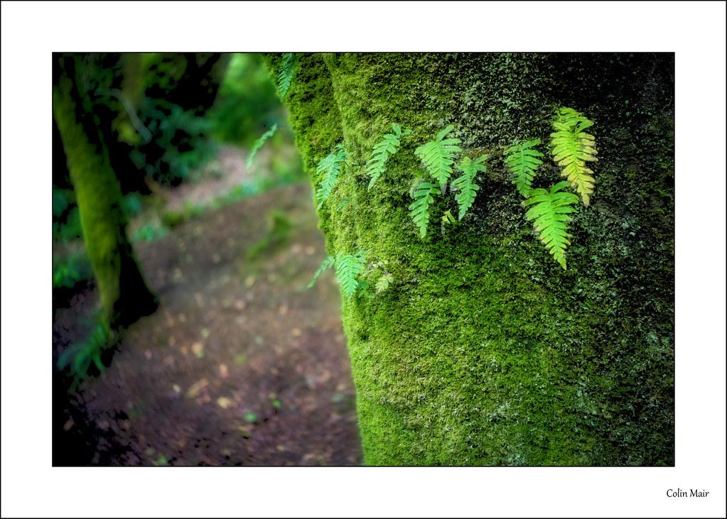 On the tree - (Industar 69, 28mm, f11) - 2021-08-23rd