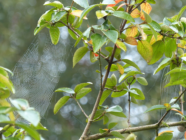 Cobwebs and Yellowing Leaves ...