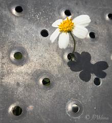 Steel Flower 2