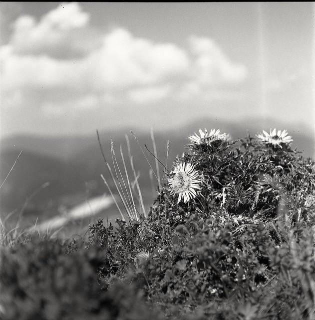 La flora dell'Alpe
