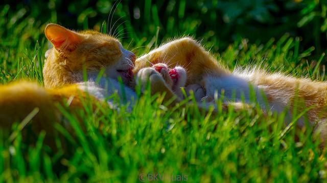 Kitten-Fun