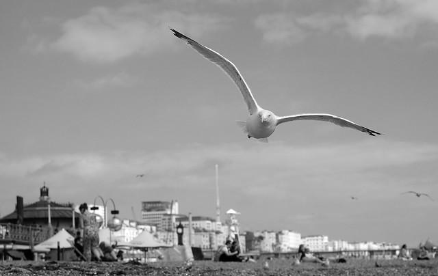 Gliding along Brighton Seafront....