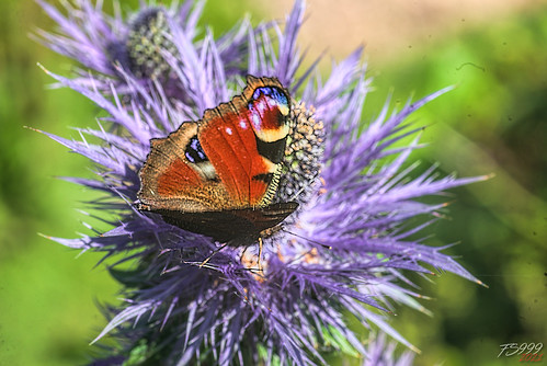 On a Blue Flower