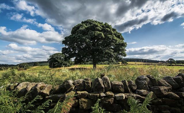 August Tree...