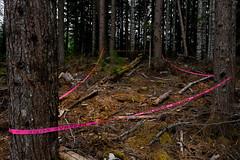 Cal-Cheak Forest