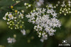 Meadow Macro Flowers