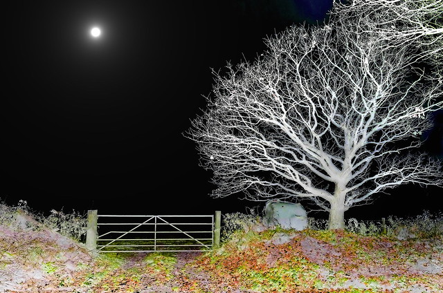 .Moon,Gate ,Tree