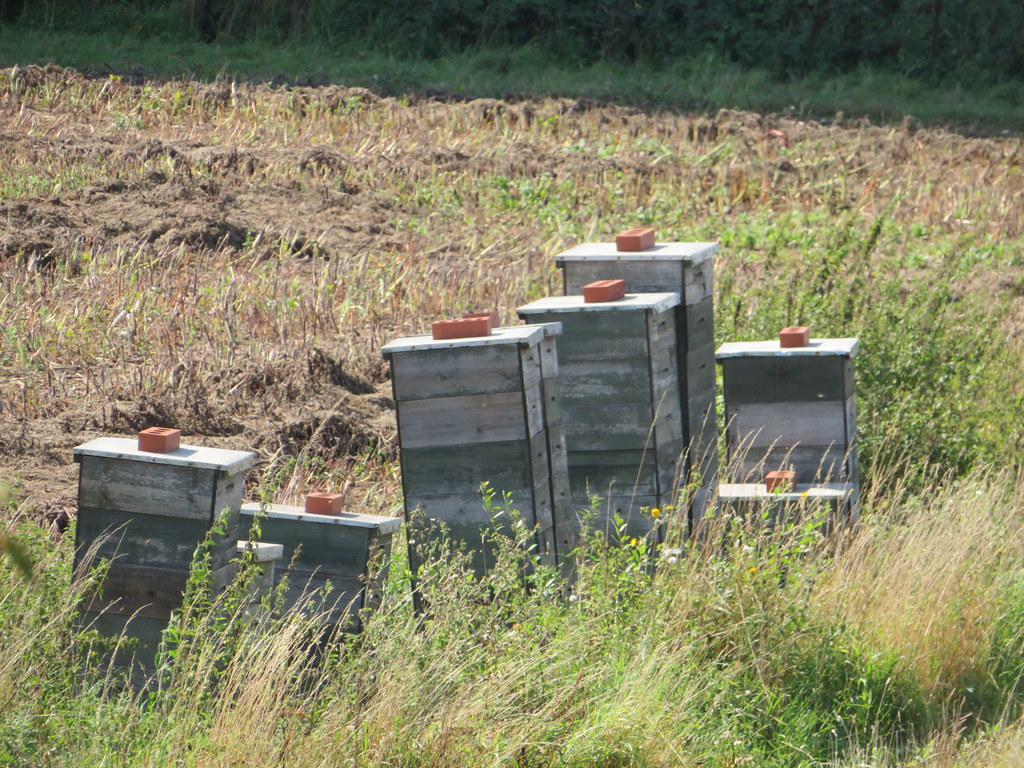 UK - Essex - Near Wakes Colne - Bee hives ?