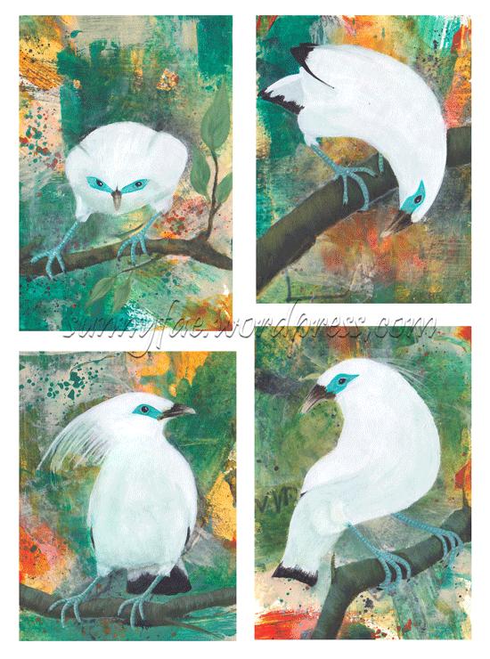 four bali mynah bird paintings