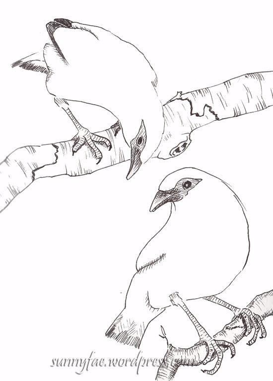 bali mynah sketches