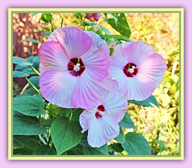 Outdoor Hibscus Bouquet