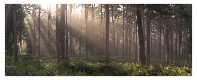 Cowdray Forest