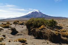 Nature around the Chimborazo volcano