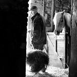 """My kingdom for a horse"" Richard III"