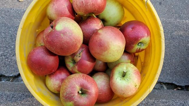 apples_in_bucket