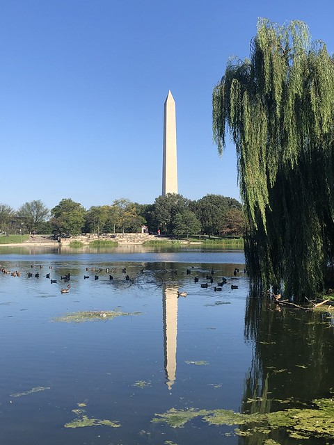 Washington Monument reflected in Constitution Gardens pond, National Mall, Washington, D.C.