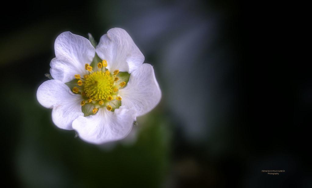 Flores y plantas 2020-175